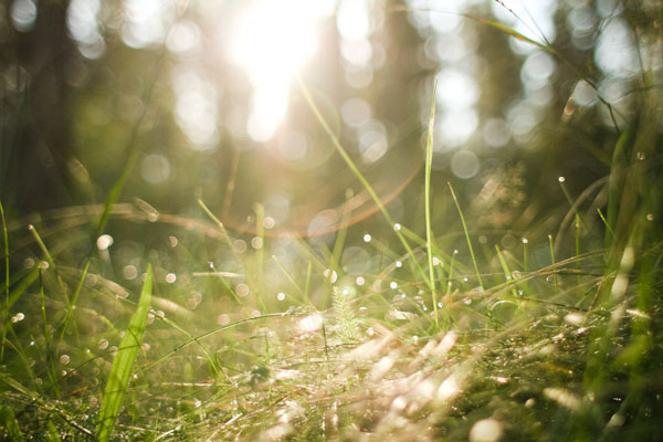 morning-forest-grass