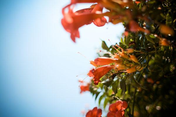 venice-flowers