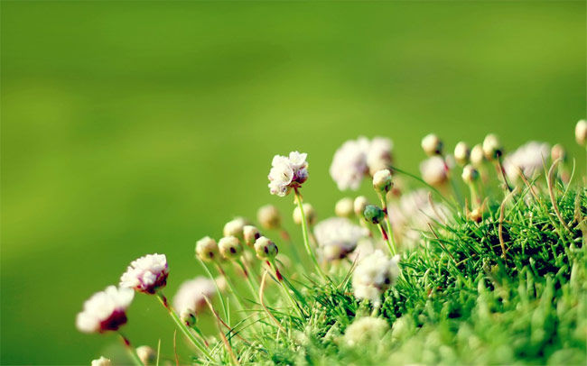 Anglesey-Flowers-Wallpaper