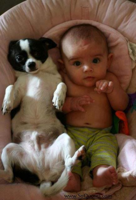 Babies and Pets 01