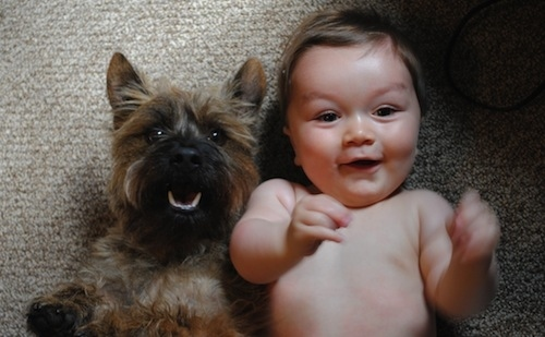 Babies and Pets 28