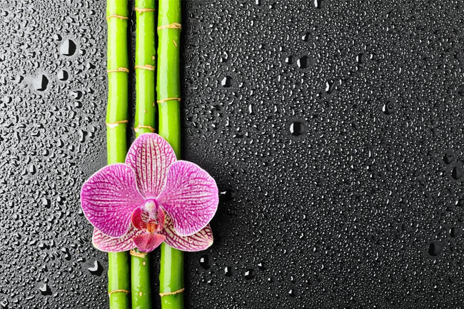 Flower-orchid-bamboo-wallpaper