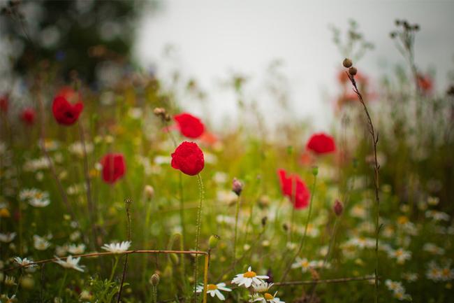 Meadow-nature-wallpaper