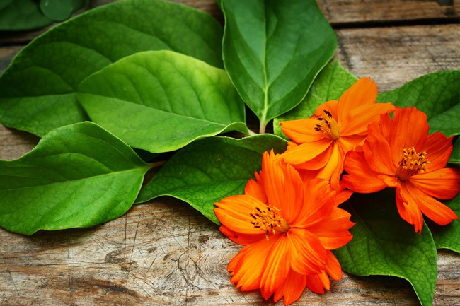 Orange,-petals,-leaves-wallpaper