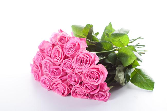 Roses,-buds,-flower-wallpaper