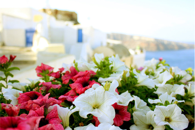 Sea,-greece,-flowers,-sun,-summer-wallpaper