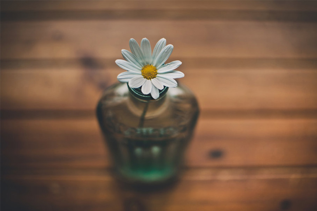 Vase,-daisy,-flower-wallpaper