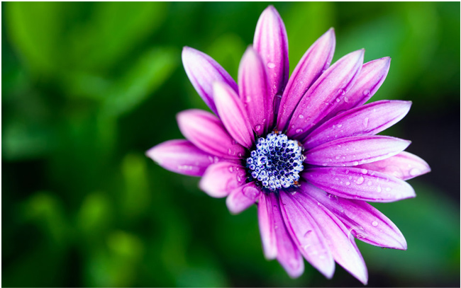 50 Beautiful Free Hd Flower Wallpapers Designmaz