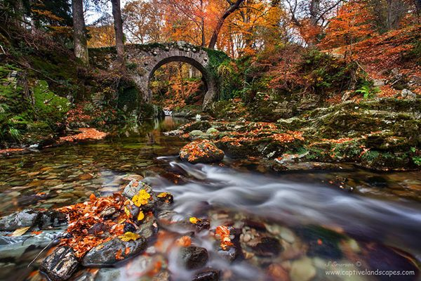 Fantasy Bridges Look Like in the Fairyland