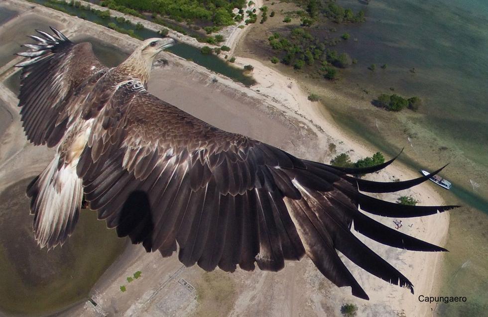 Eagle soaring in the Bali Barat National Park