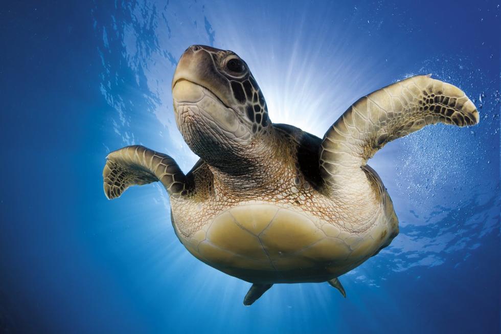 Oceans Winner