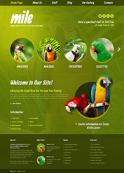 Theme to Start Exotic Birds Blog Pet Store