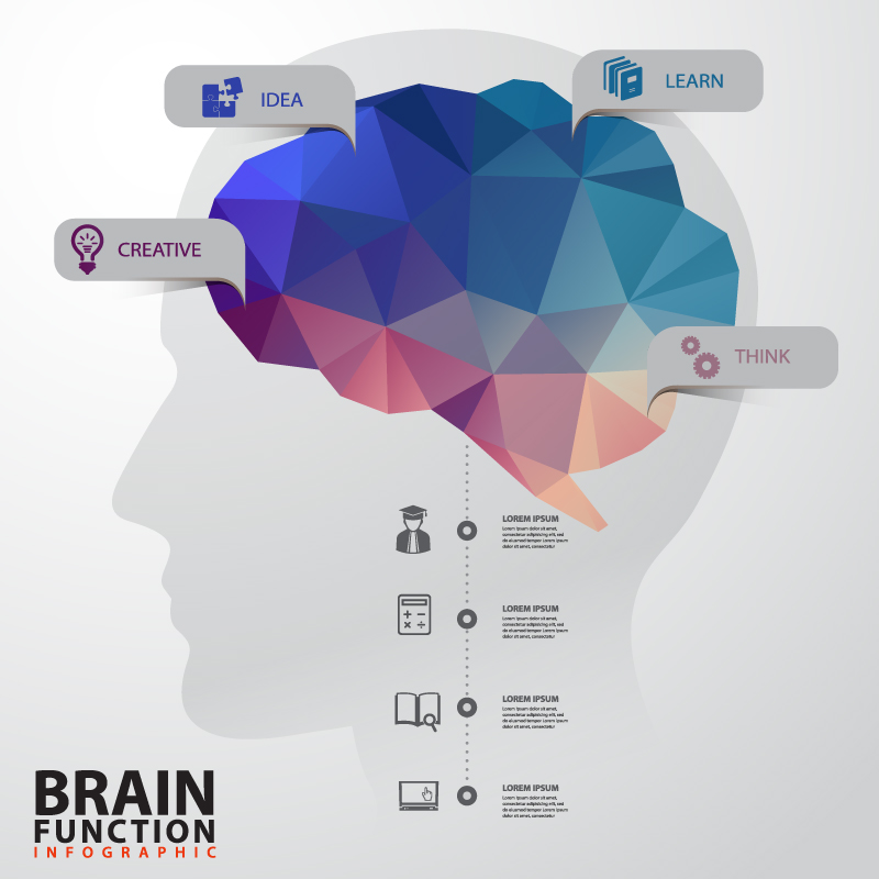 Creative brains infographic vector