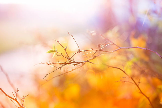 abstract colors of autumn