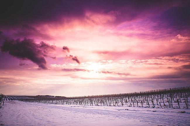 sun and clouds over Snowy Wineyard
