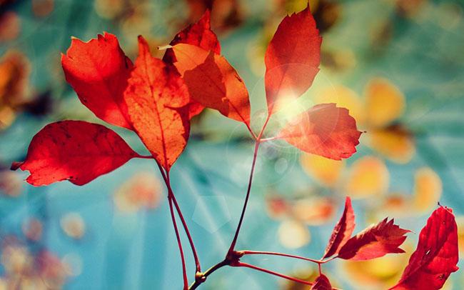 Glare of autumn wallpaper