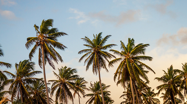 coconut graden