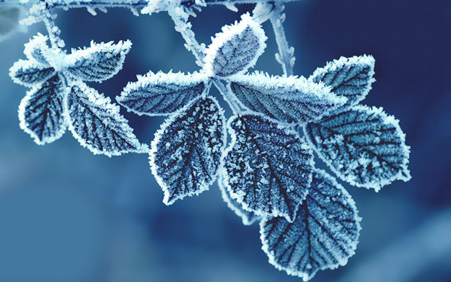 cold leaves wallpaper