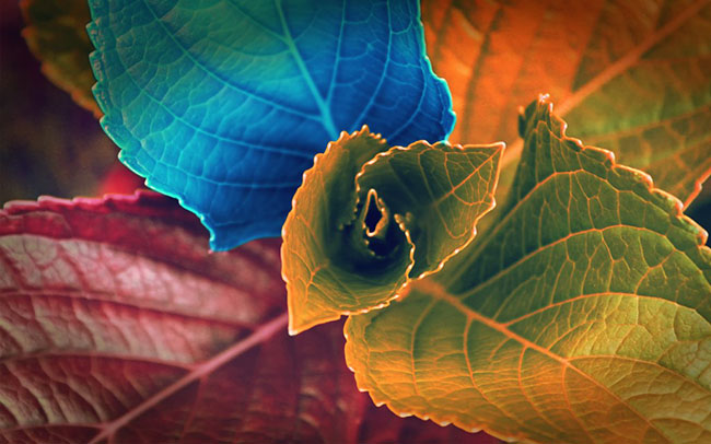 colors of leaves wallpaper