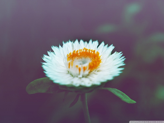 cute_flower-wallpaper-