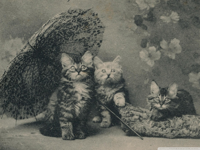 cute_kittens_vintage-wallpaper-
