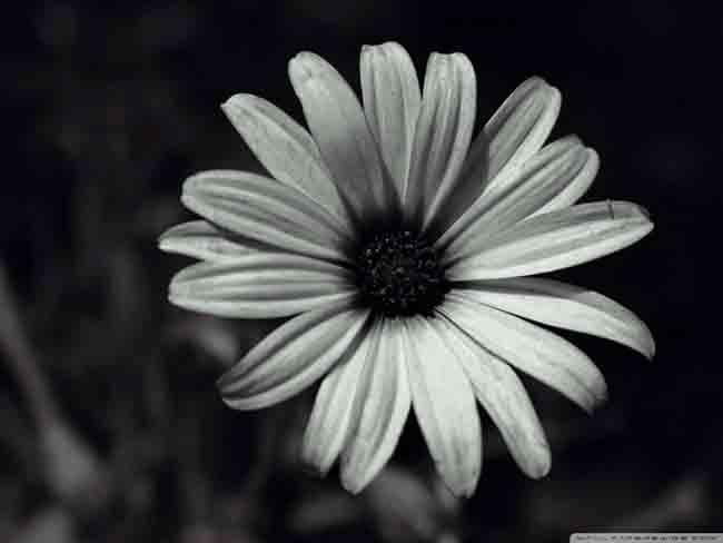 flowers_174-wallpaper-