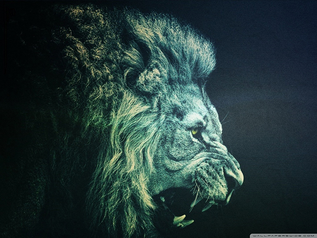 lion_14-wallpaper-