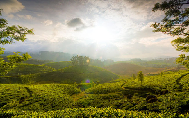 munnar hills kerala india wallpaper