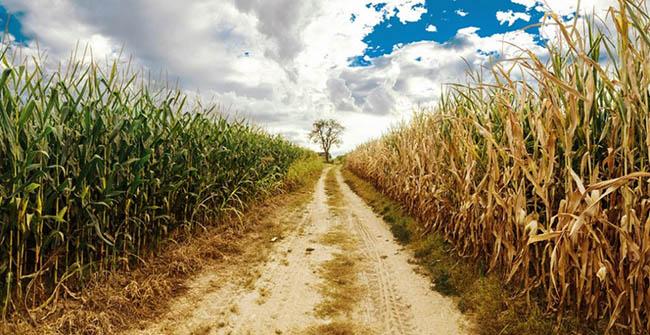 panoramic rural road