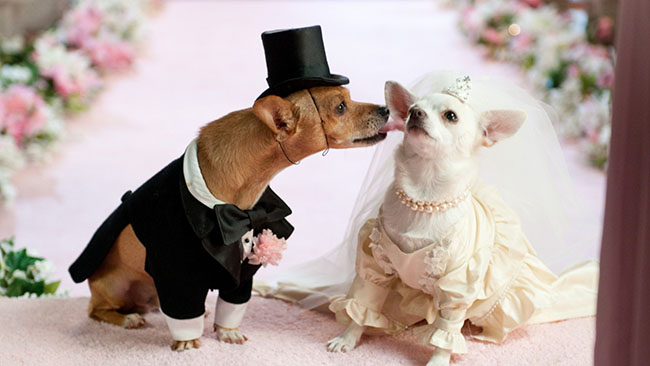 puppies_dogs_wedding_dress