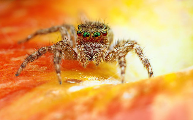 scary spider wallpaper