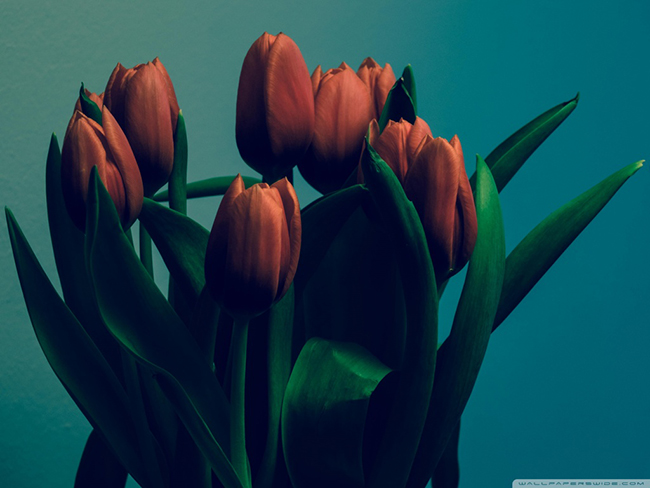 tulips_vintage-wallpaper-