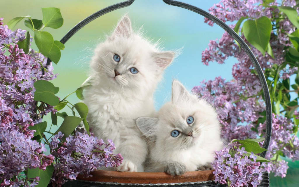 Blue Eyes And Blossoms Wallpaper