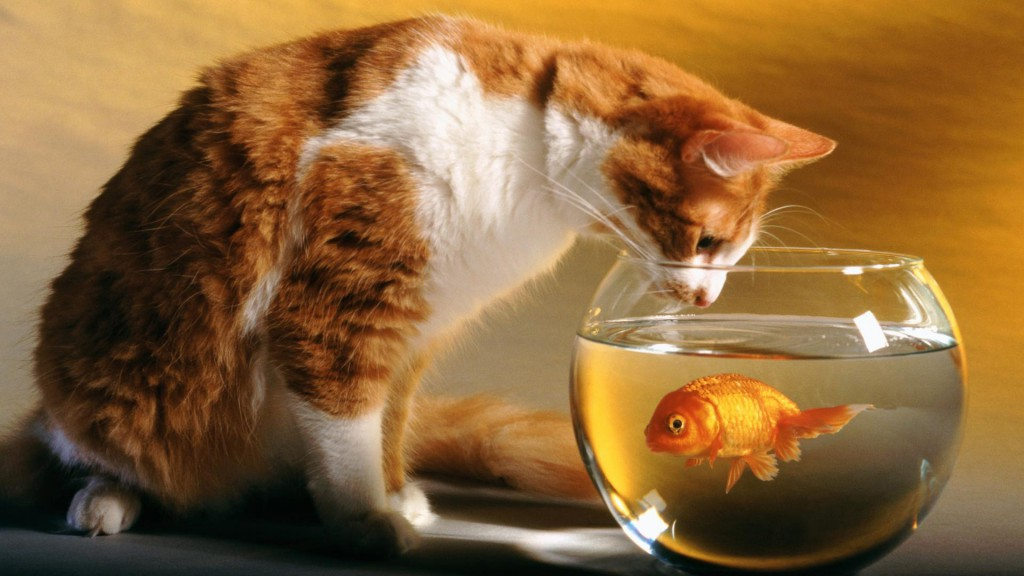 Cat And Fish Wallpaper
