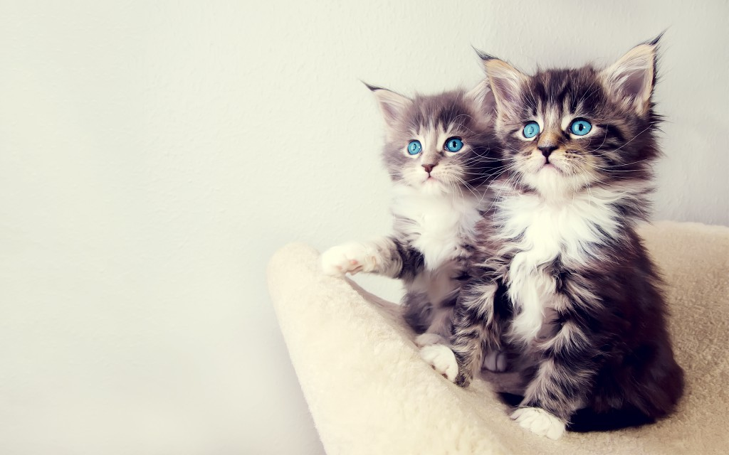 20 Free Cute Cat Hd Wallpapers Designmaz