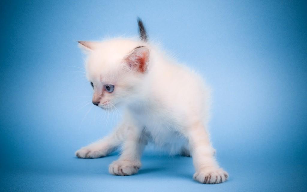 Cute Mew Mew Cat Wallpaper