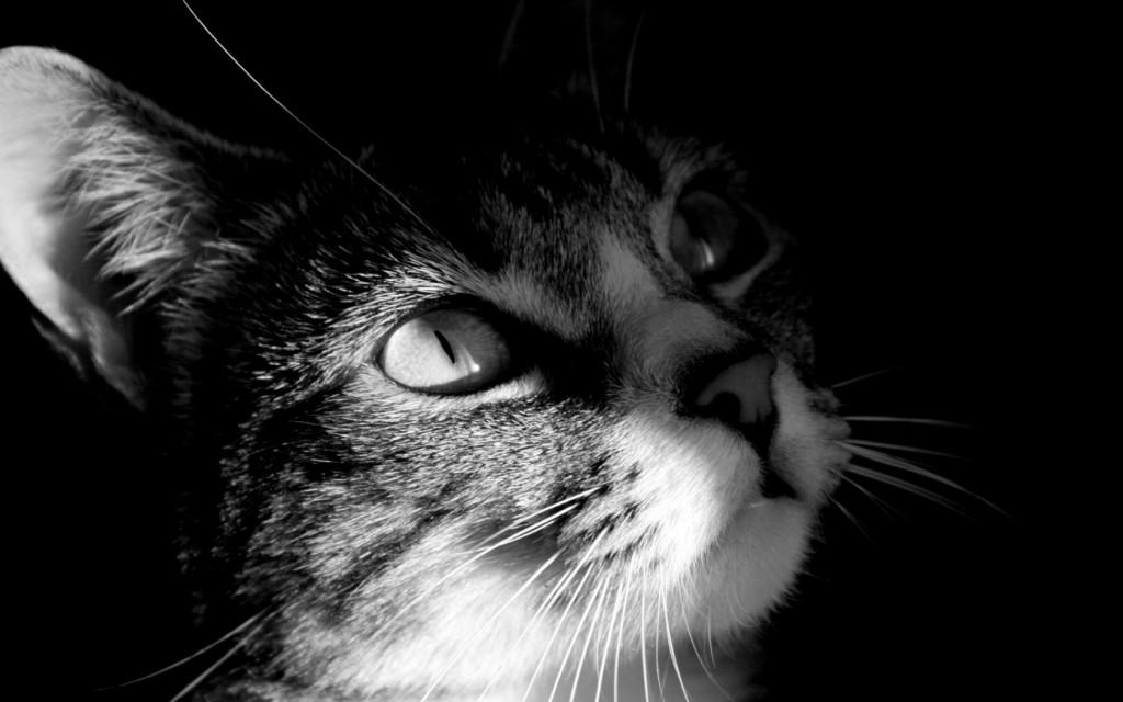 Dark Cat View Wallpaper