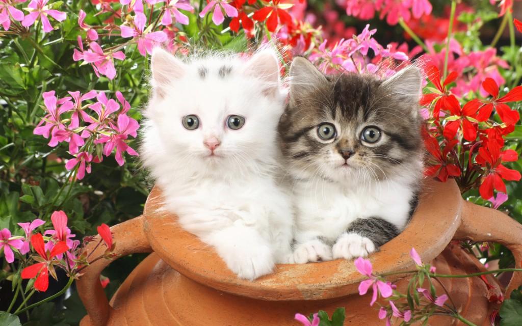 20 free cute cat hd wallpapers designmaz little sprouts wallpaper voltagebd Gallery