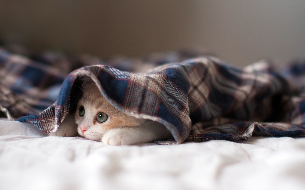 20 free cute cat hd wallpapers designmaz sleepy kitten wallpaper altavistaventures Choice Image