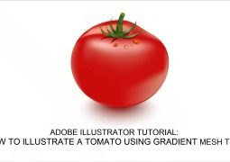 How-to-create-a-Tomato-Vector-in-Adobe-Illustrator