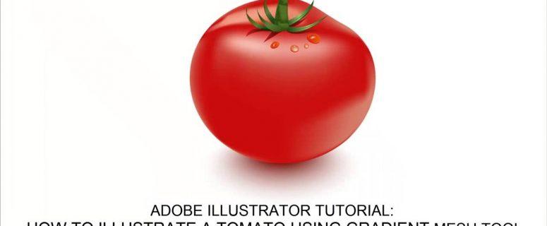 How-to-create-a-Tomato-Vector-in-Adobe-Illustrator