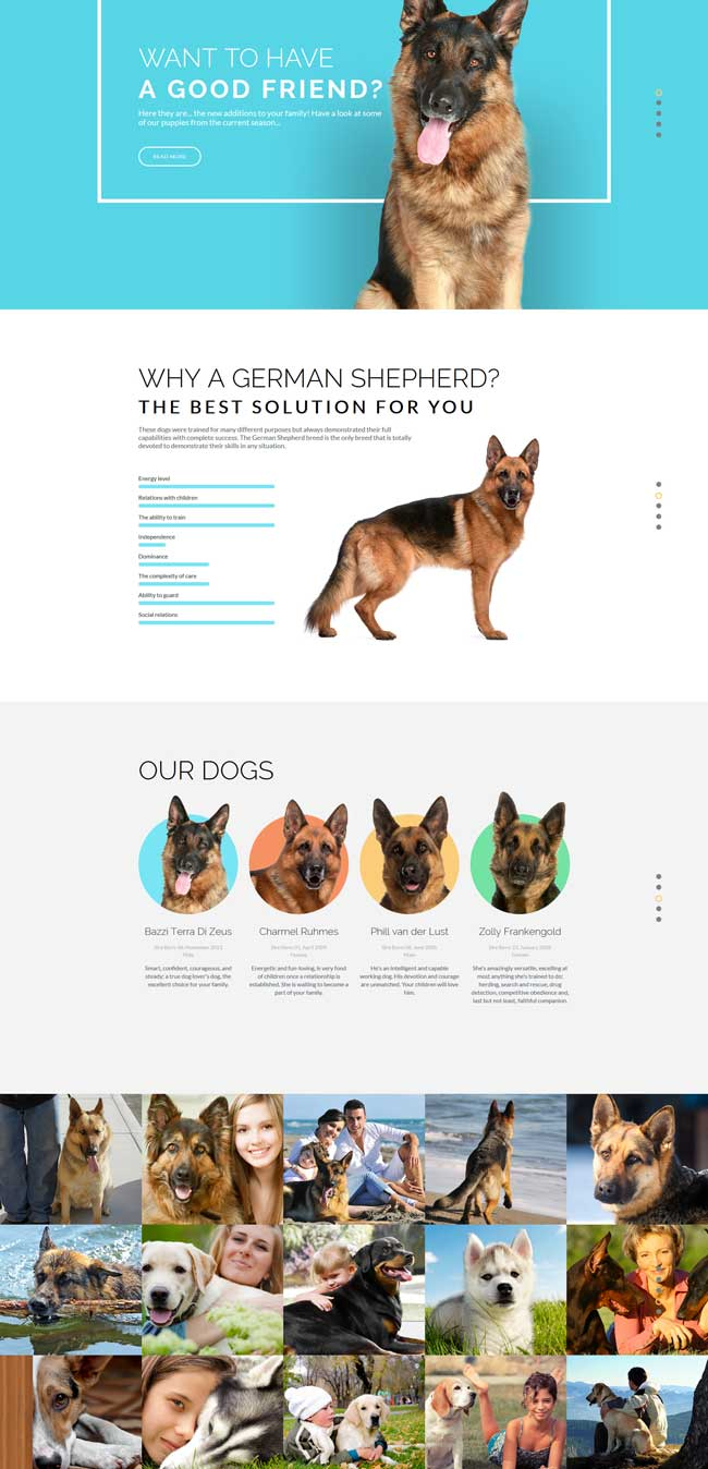 Dog-Responsive-Website-Template